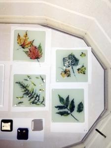 leaf inclusions